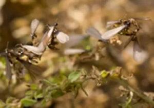 pest control services termite extermination